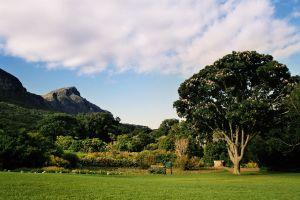 Kirstenbosch botanická zahrada