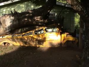 školní autobus pod kmenem padlého stromu v Botanické zahradě v Roseau
