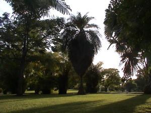 Roseau Botanical Garden