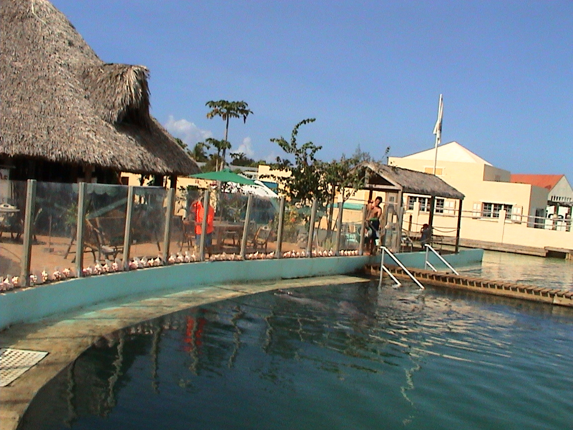 restaurace na břehu bazénu delfinária Dolphin FantaSeas