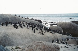 tucnaci_boulders_beach