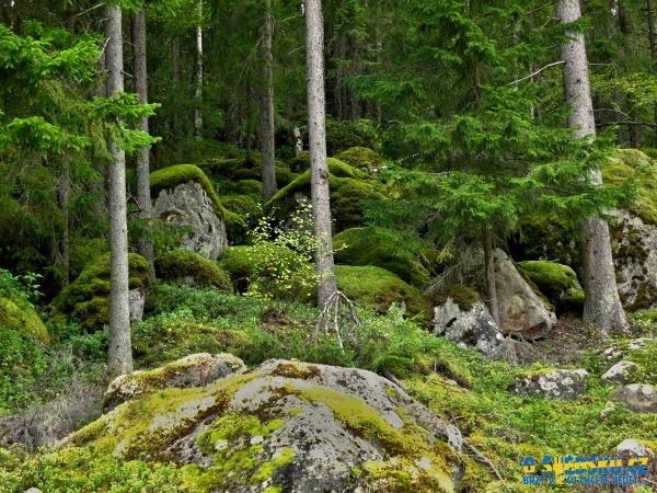 Okolní lesy jsou husté a většinou skoro neprůchodné kvůli obrovským kamenům. Navíc jsou díky všudy přítomné vodě i hodně vlhké.