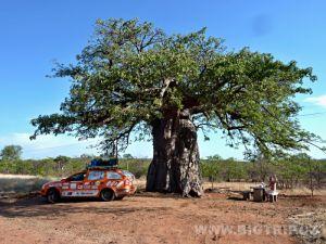 BigTrip_baobab