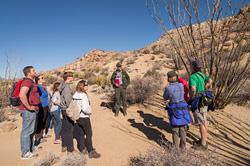 Návštěvníci národního parku Joshua Tree si v doprovodu rangera prohlížejí zvláštní sukulent zvaný ocotillo (vysoký keř vpravo).