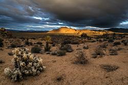 K typickým rostlinným obyvatelům národního parku Joshua Tree patří zvláštní druh opuncie nazývaný cholla či teddy bear (hustý světlý keř vlevo vpředu)